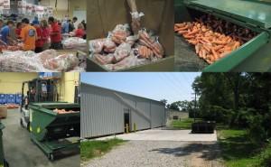 Food-waste-gleening-300x185