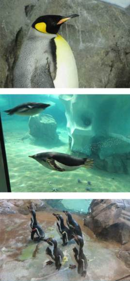 Helzberg-Penguins-Blog-Post-Photo