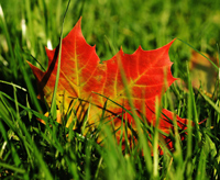 colorful leaf on a lawn